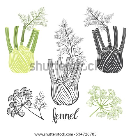 Fennel, isolated vector elements on a white background. Royalty-Free Stock Photo #534728785
