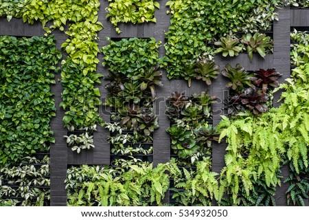 Green wall, eco friendly vertical garden  #534932050