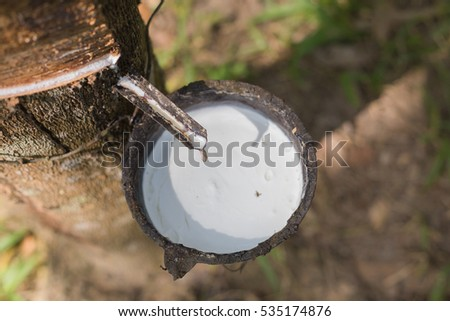 Milk of rubber tree into a wooden bowl #535174876
