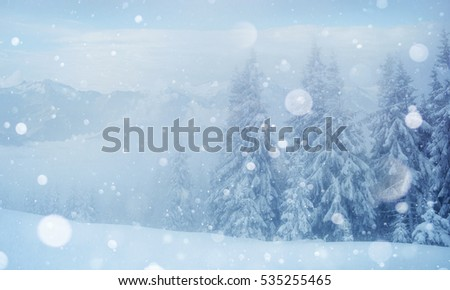 Mysterious landscape majestic mountains in the morning fog.  Beautiful winter snow covered trees. light effect bokeh. Carpathian Ukraine.