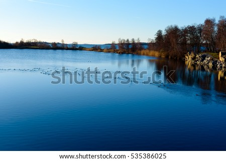 Flock of tufted ducks (Aythya fuligula) in water filled quarry on a fine winter afternoon. Location Torko island outside Ronneby, Sweden. #535386025
