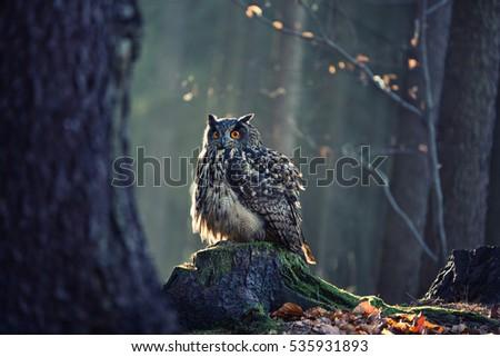 Eurasian Eagle Owl (Bubo Bubo) sitting on the stump, close-up, wildlife photo.