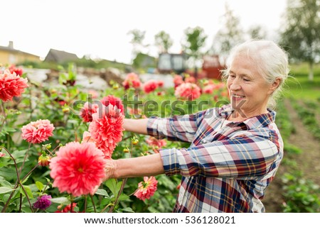 farming, gardening and people concept - happy senior woman with flowers blooming at summer garden #536128021