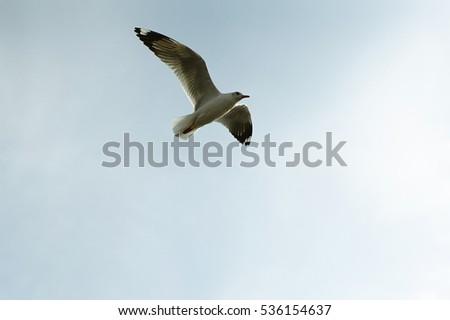 seagulls flying  #536154637