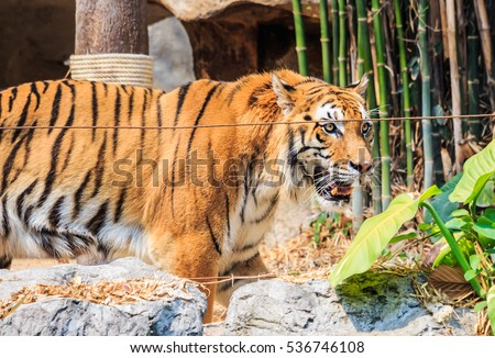 A portrait of tiger #536746108