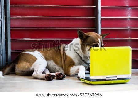 dog look at computer laptop  #537367996