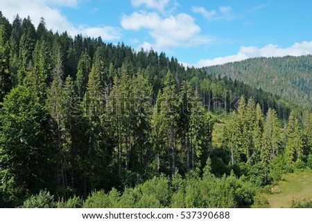 View of green wood mountain forest #537390688