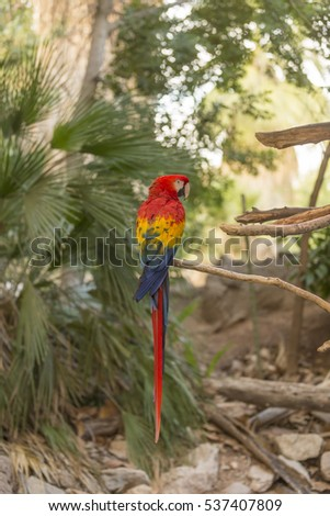A large Macaw #537407809