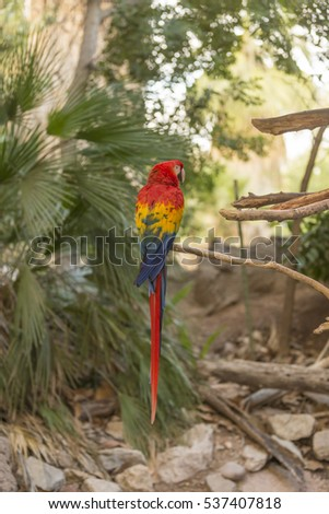 A large Macaw #537407818