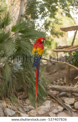 A large Macaw #537407836