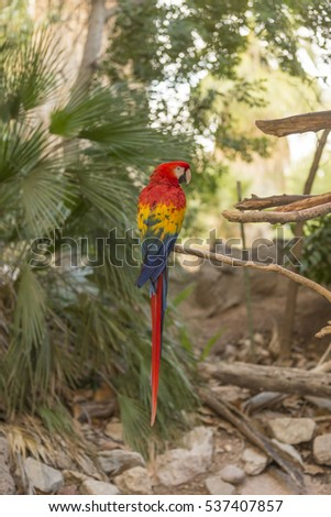 A large Macaw #537407857
