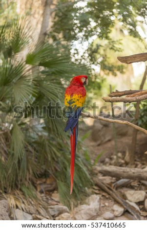A large Macaw #537410665