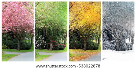 Spring, Summer, Fall and Winter. Four seasons photographed on the same street from the exact same location. Also available in individual high resolution.  Royalty-Free Stock Photo #538022878