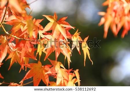Autumn park #538112692