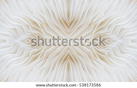 abstract background macro image of Sajor-caju Mushroom #538173586