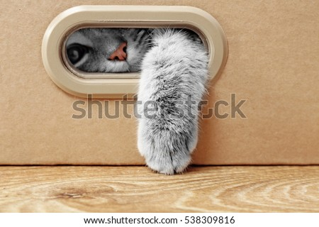 Cute cat in cardboard box Royalty-Free Stock Photo #538309816