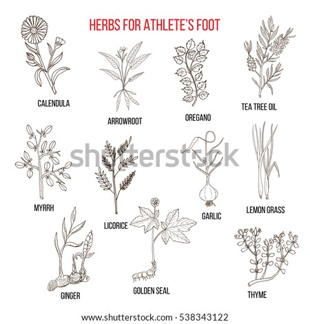 Collection of herbs for athlete foot. Hand drawn botanical vector illustration #538343122