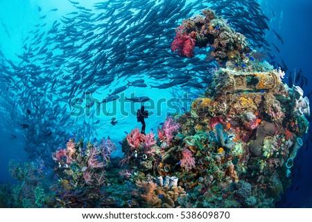 Wreck & Jack, Chuuk, Micronesia #538609870