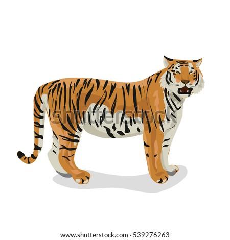 tiger #539276263