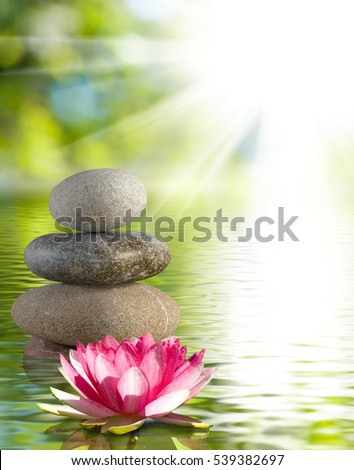 Image of stones and lotus flower on the water close-up, Beautiful lotus flower and stones in the water. #539382697