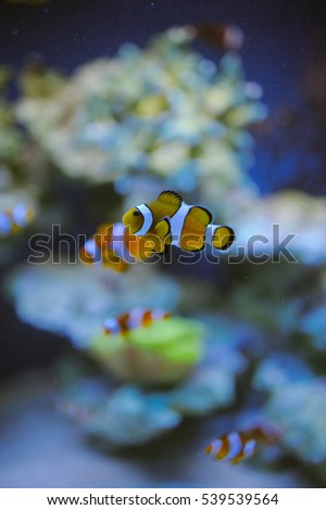 Sea life: exotic tropical coral reef fish #539539564