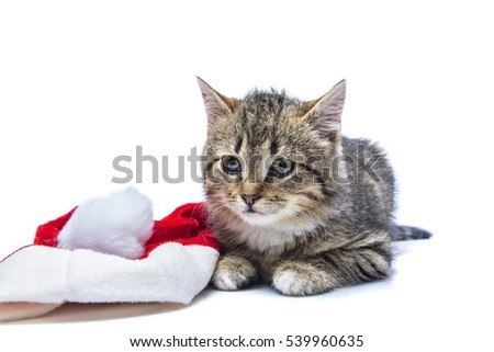 the surprised isolated kitten home  #539960635
