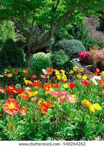 Beautiful flower at Cockington Green Gardens, Canberra, Australia #540264262