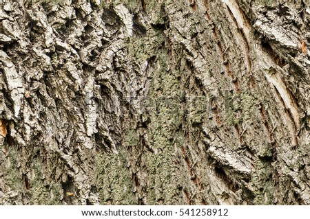 Texture, background, seamless pattern. This is useful for designers. bark of tree. Outside, above the timber, piece of trunks, stems and roots of woody plants #541258912