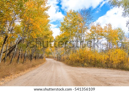 Golden birch trees along empty road and blue sky. Vivid colors of autumn foliage. Beautiful nature wallpaper #541356109