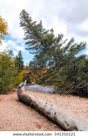 Spruce tree bend along the river. beautiful landscape. Autumn foliage. Colorado national park. Secret hidden place by the river #541356121