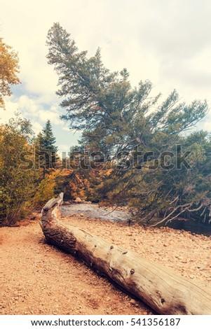 Spruce tree bend along the river. beautiful landscape. Autumn foliage. Colorado national park. Secret hidden place by the river. Filter #541356187