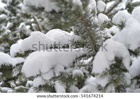 Winter trees covered with snow. Christmas Tree #541674214