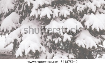 Pine tree covered with snow. Toning Winter landscape #541875940