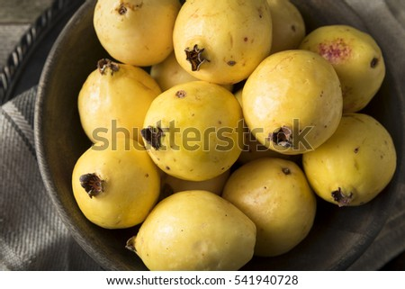 Raw Organic Yellow Guava Fruit Ready to Eat #541940728