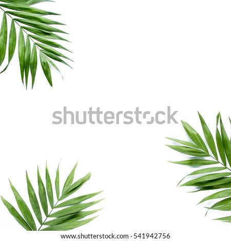 green palm leaf branches on white background. flat lay, top view #541942756