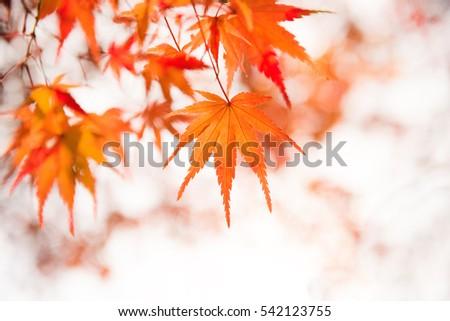 Arashiyama, kyoto, Japan #542123755