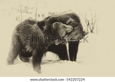 Brown Bears (Ursus arctos) in Lake Clark National Park, Alaska, USA, vintage style #542207224