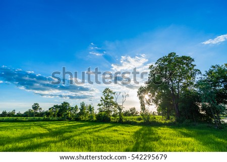 Morning Sunrise over the Green rice paddy fields.  #542295679