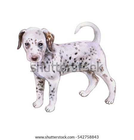 Watercolor closeup portrait of cute Dalmatian puppy breed dog isolated on white background. Large shorthair carriage spotted dog from Croatia. Hand drawn sweet home pet. Greeting card design. Clip art