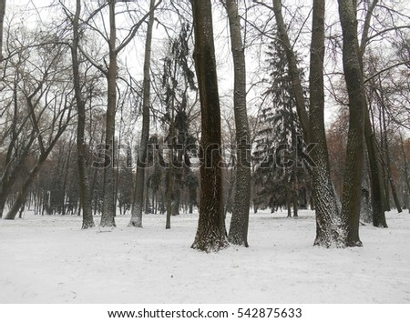 winter landscape park #542875633