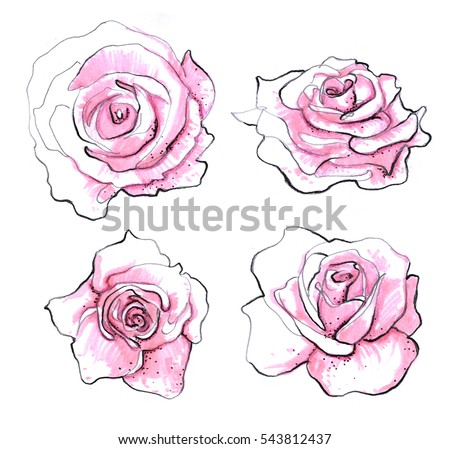 Rose set isolated. Realistic pencil drawn rose flowers background. Ink, pencil, watercolor, pink marker. Botanical art illustration. Vintage design for greeting card, postcard, invitation, fabric.