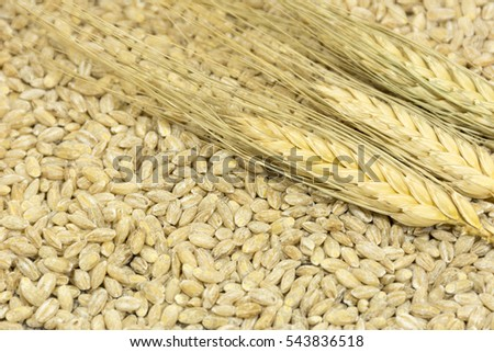3 spikelets of wheat lying in the grain benefits, fiber, cereal crop, food #543836518