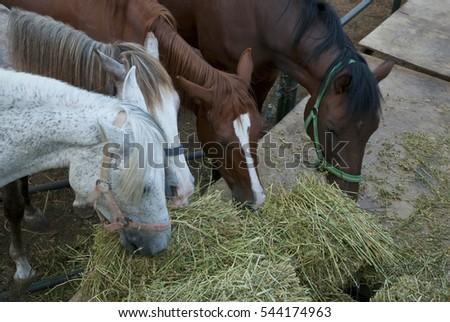horse farm #544174963