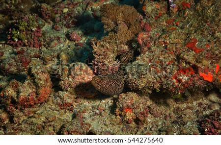 underwater animal #544275640