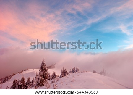 Winter in the mountains, the trees are covered with snow. good sunlight. Sunrise Sunset #544343569