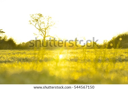 field of grass and sun in morning #544567150