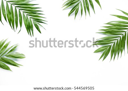 green palm leaf branches on white background. flat lay, top view #544569505