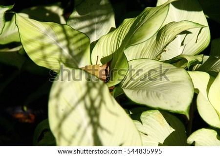 White and Green leaf texture. Leaf texture background #544835995