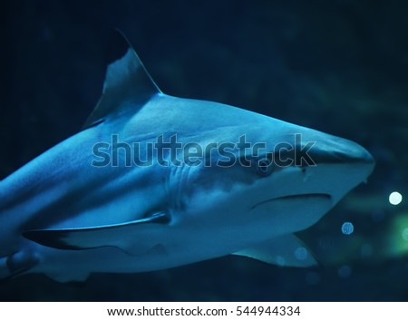 Shark at the blue water portrait