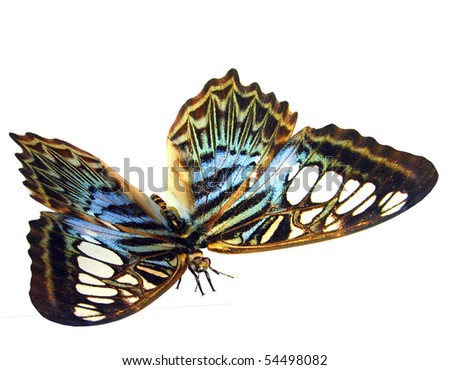 3D rendering of a colorful butterfly